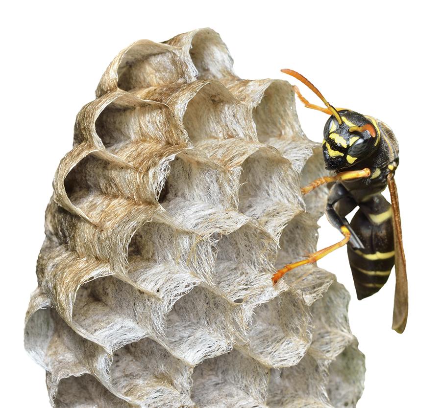 habitat-wasp.png