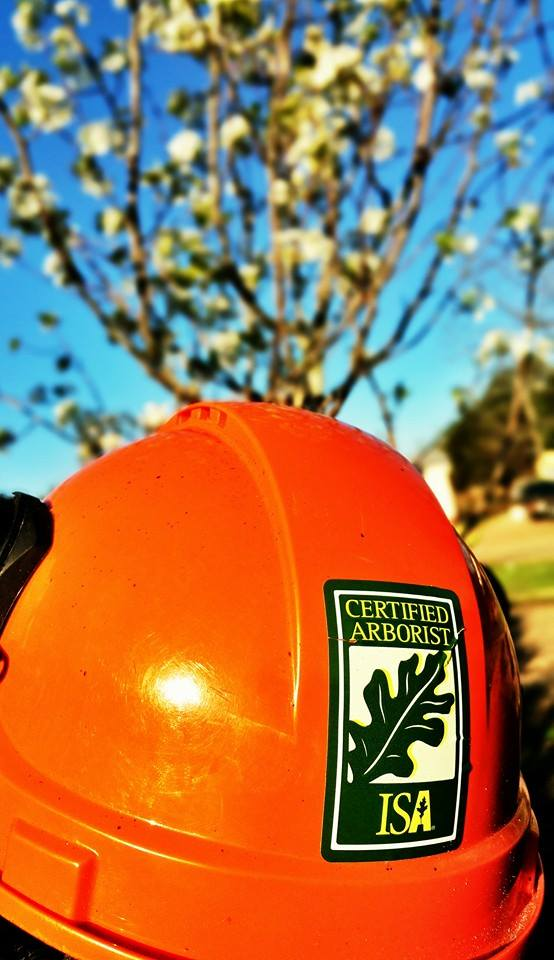 Superior Services has Certified Arborists on staff for all of your Tree Care needs.