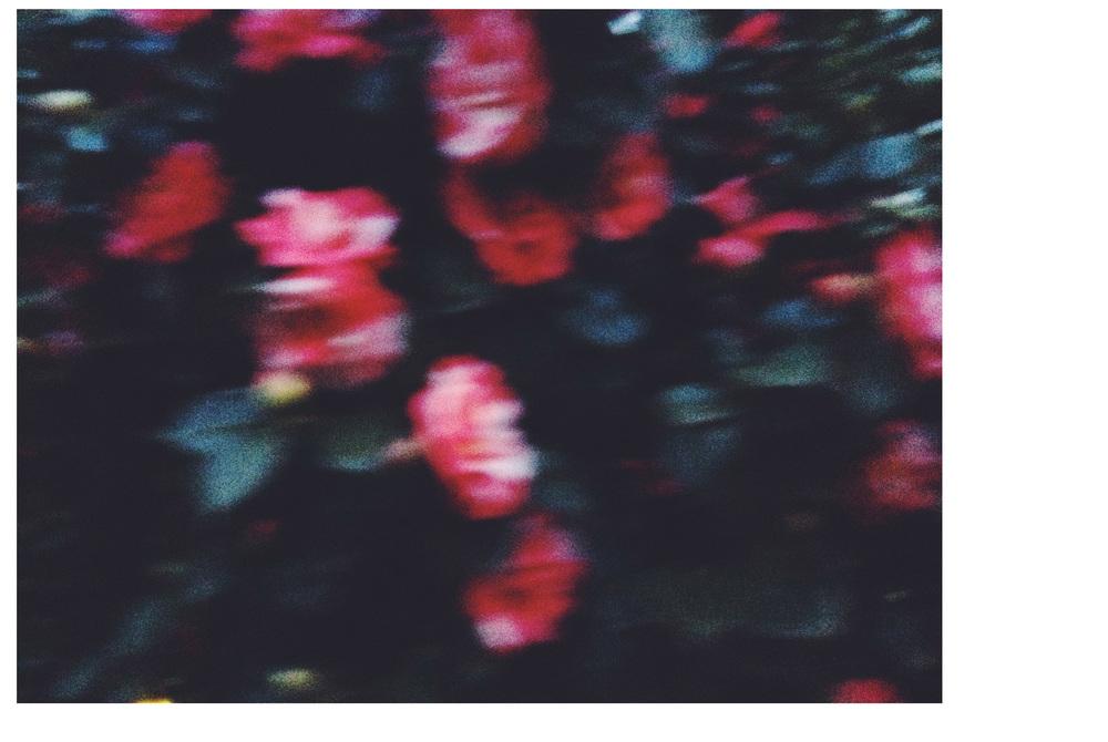 FlowerWborder2.jpg