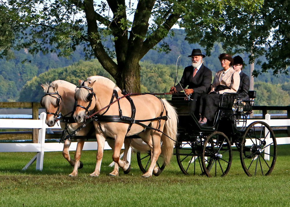 Phil driving Frode and Ildar at the Villa Louie Carriage Classic in September, 2016