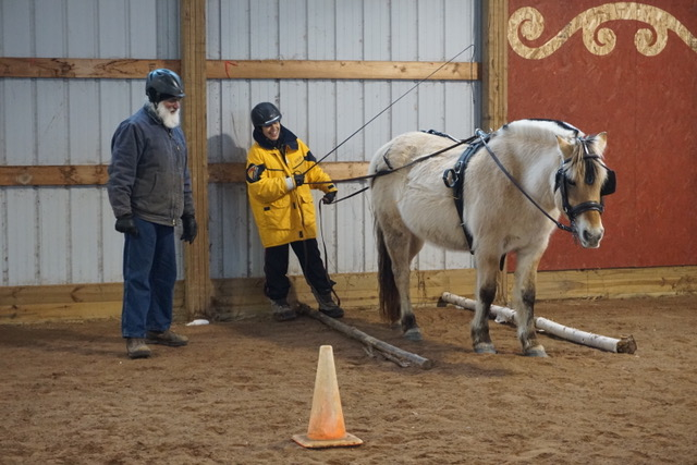 Ground driving horsemanship skills. Here Kathy Jo is backing Marcy into the poles one step at a time.