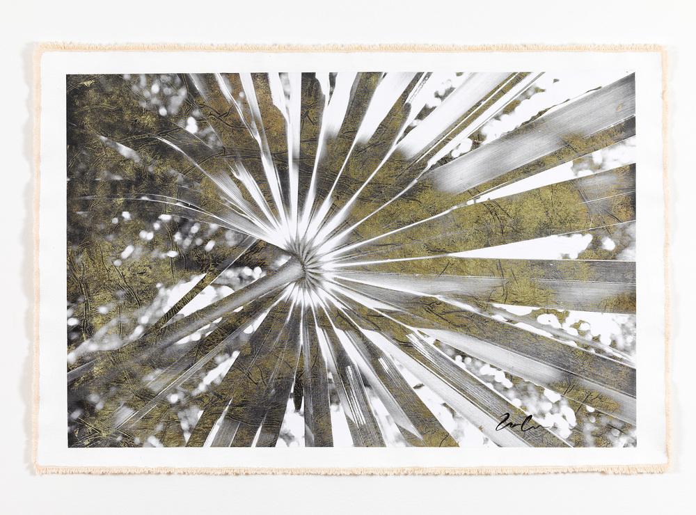 Cocotrina Halesander I