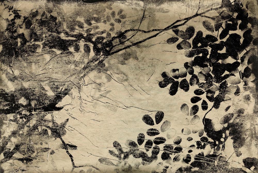 Jungle Canopy II (negative)