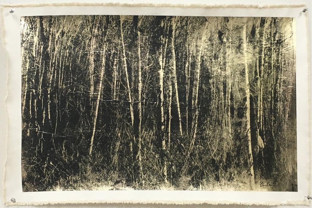 Birch Grove, Negative