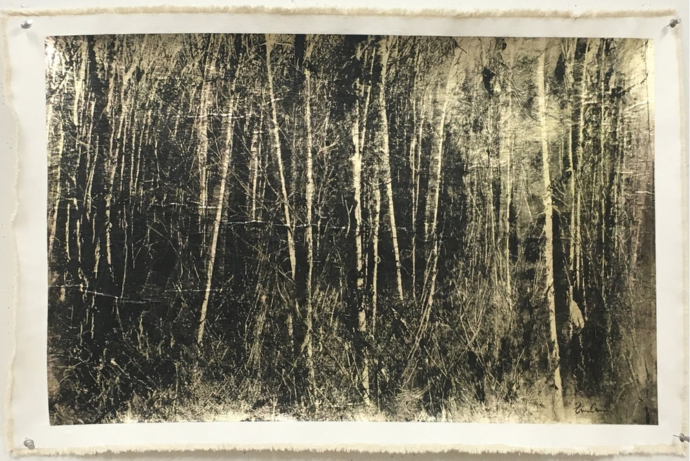 Birch Grove, Negative