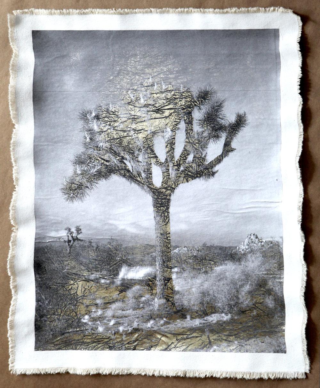 Joshua Tree I