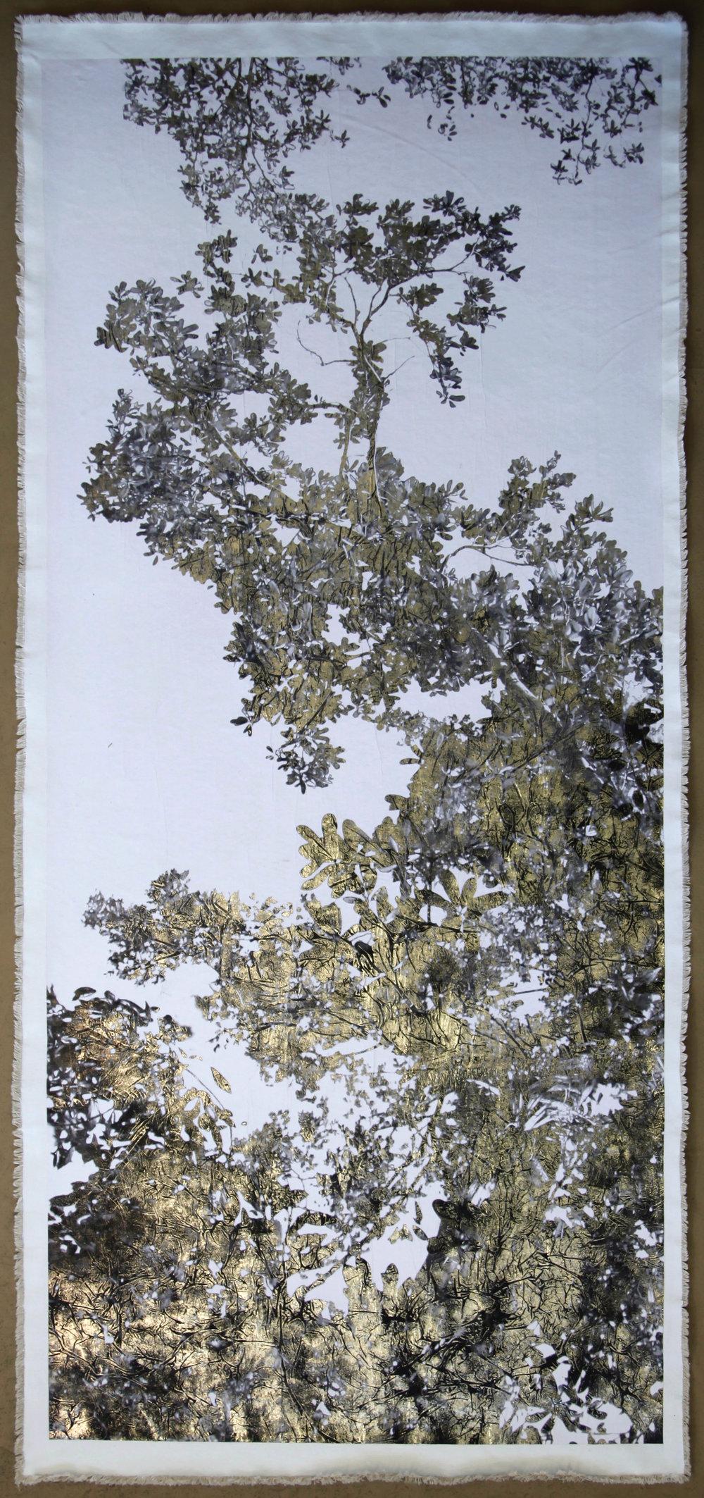 Jungle Canopy VI, Positive
