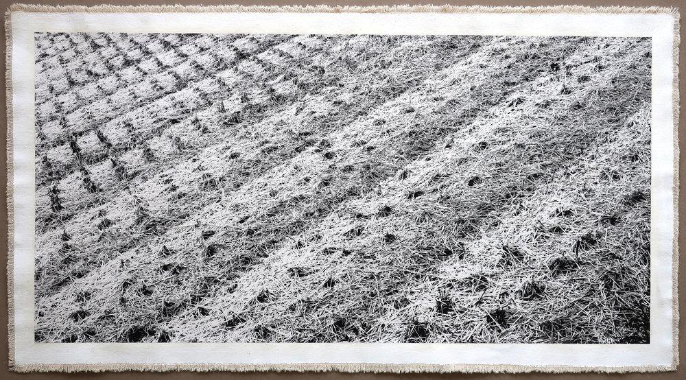 Rice Field, Aso V