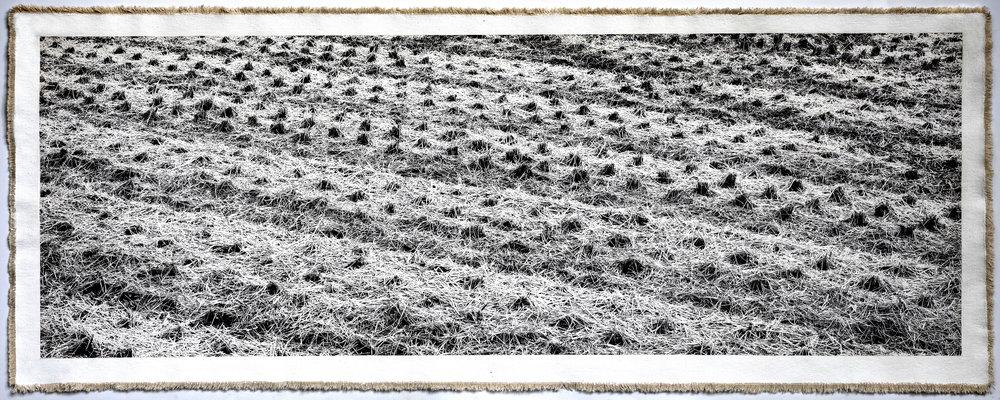 Rice Field Aso, III