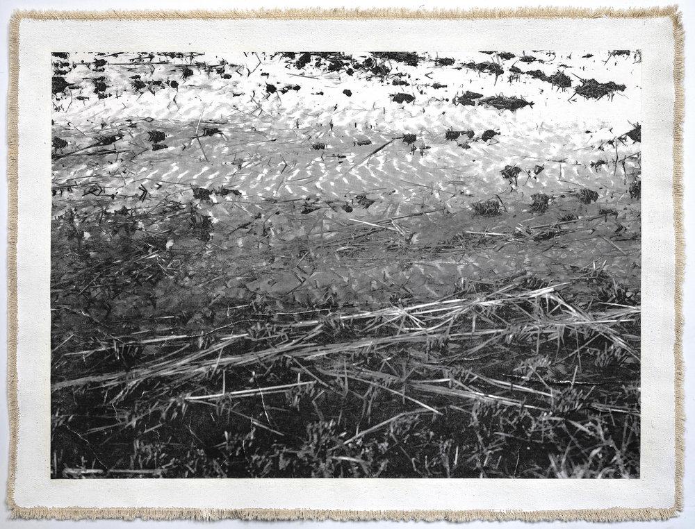 Rice Field, Aso VIII