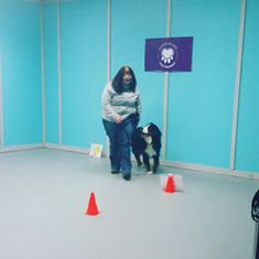 Rally Obedience is a fun sport that will enhance your relationship with your dog as well as your training skills