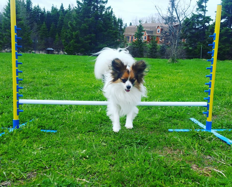 Dog Sports - Dreams of competing in agility or obedience with your dog? Or just simply want to have fun and get active with your dog? Our sport classes are a great way to have fun, gain confidence and burn energy! We offer classes in Agility and Rally Obedience!