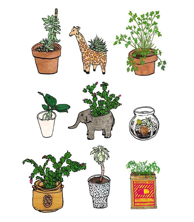 I have a bit of a plant problem #iactuallyownallofthese #wip #illustration #illustratorofinstagram #penandink #plants #succulents #giraffe #elephant #greenthumb #drawingaday #linework