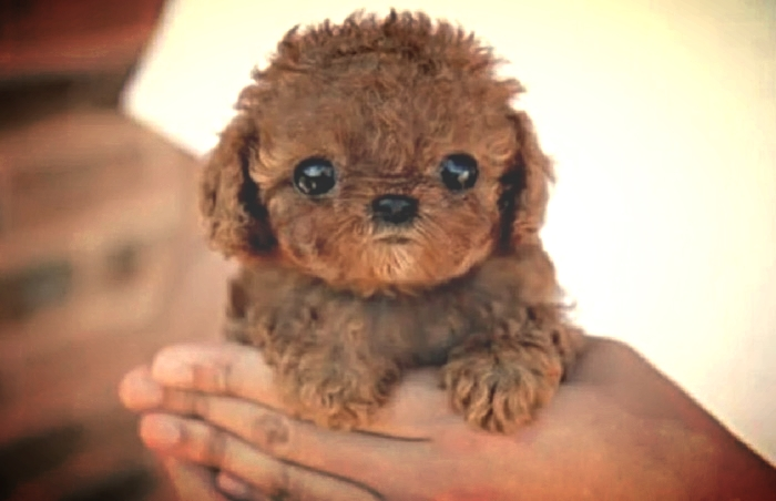 "taken from a buzzfeed article titled ""20 sad puppies that will ruin your day."" obviously."