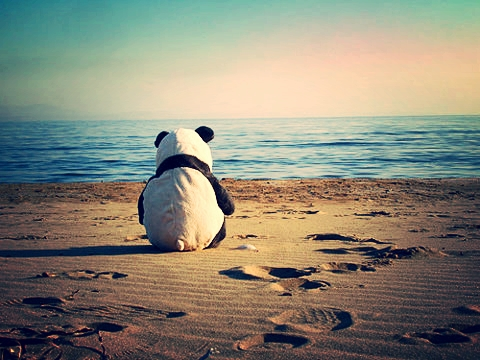 a lonely panda at some beach