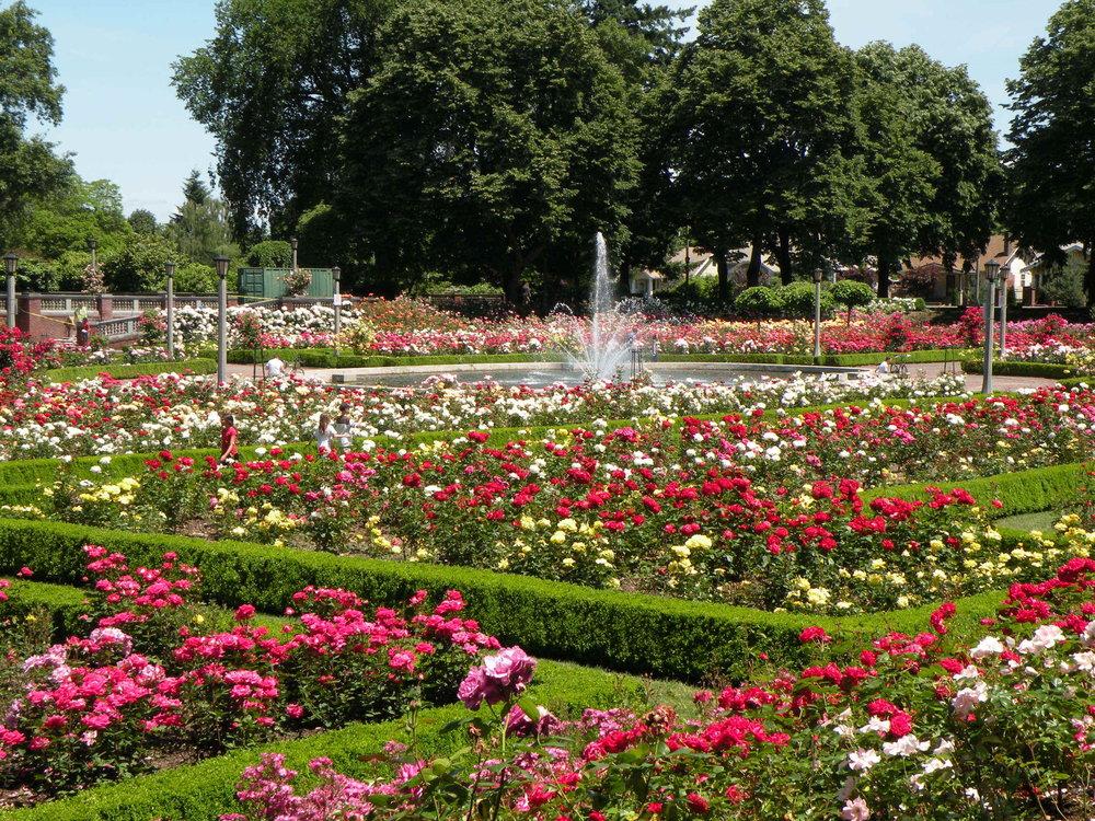 Portland Rose Test Garden -