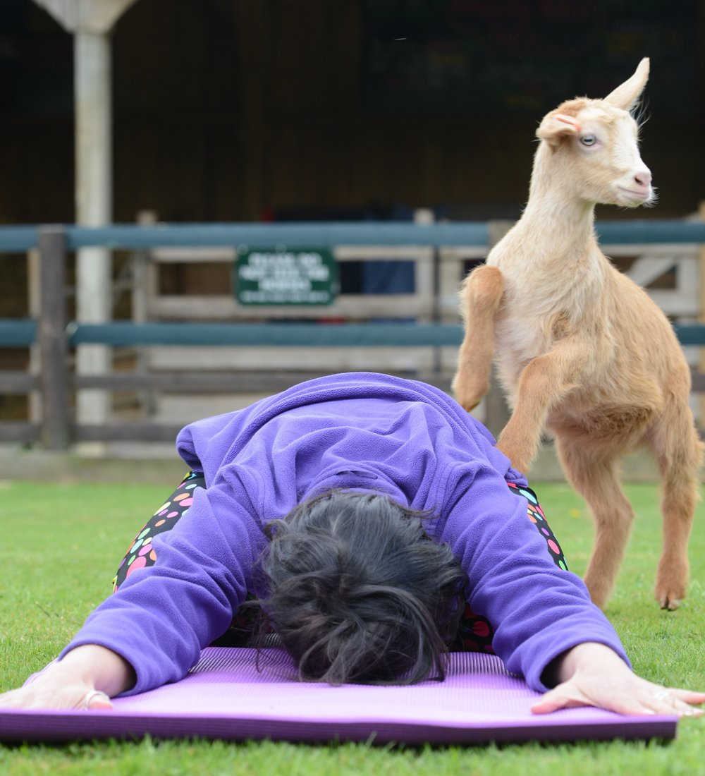 barnyard animal yoga.jpg