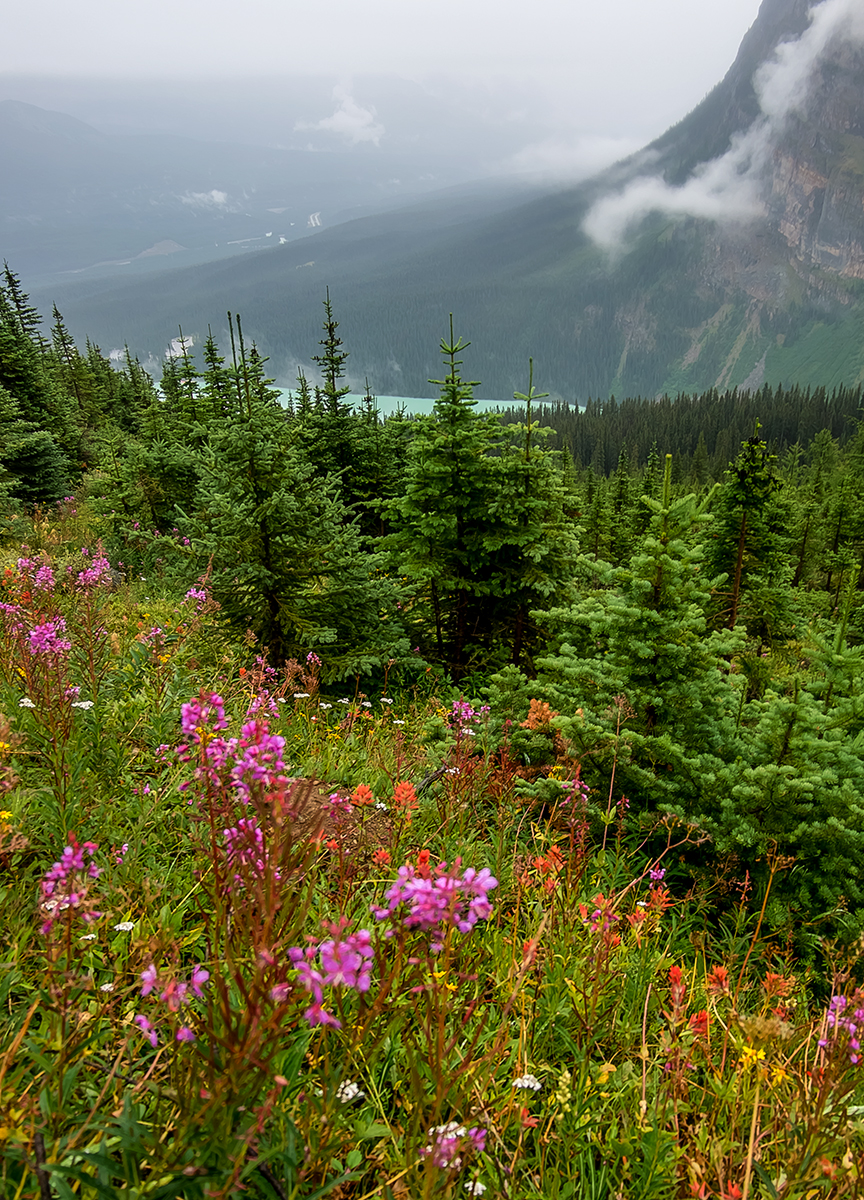 Wild flowers carpet the slopes of Mt. St. Piran, high above Lake Louise.