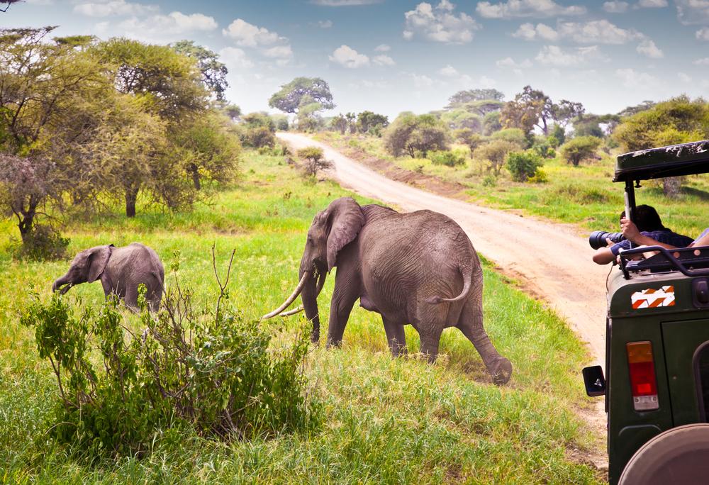 Photographer on safari with elephant.jpg