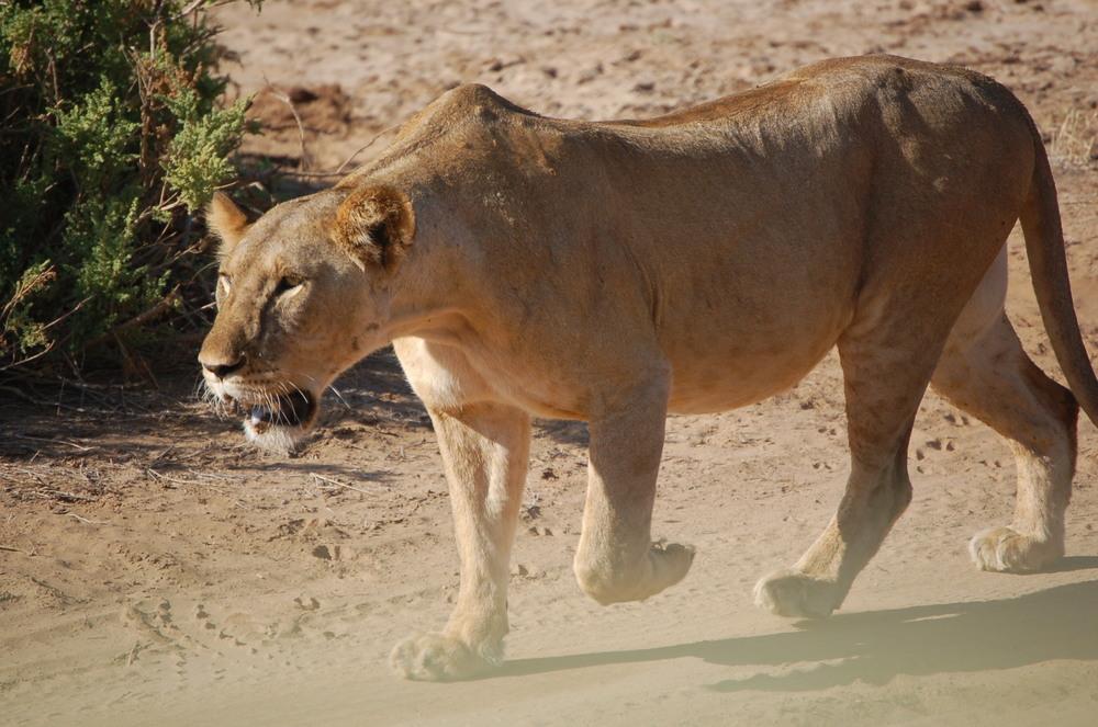 AfricaD5010075.JPG