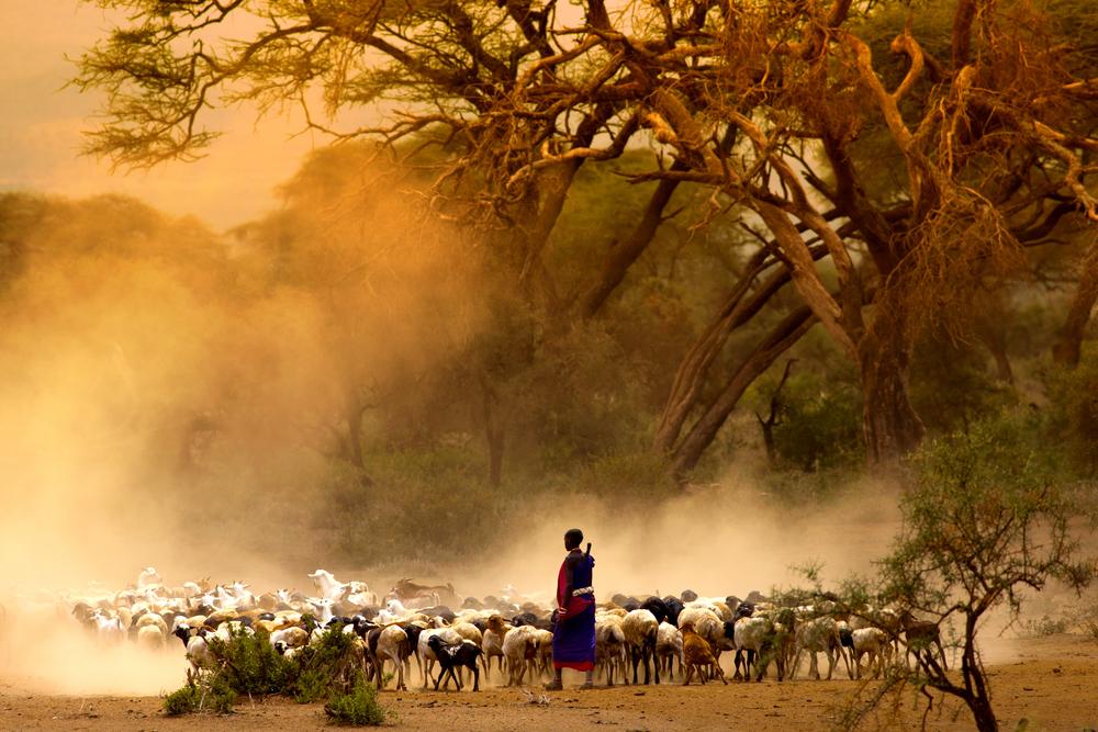 Masai shepherd.jpg