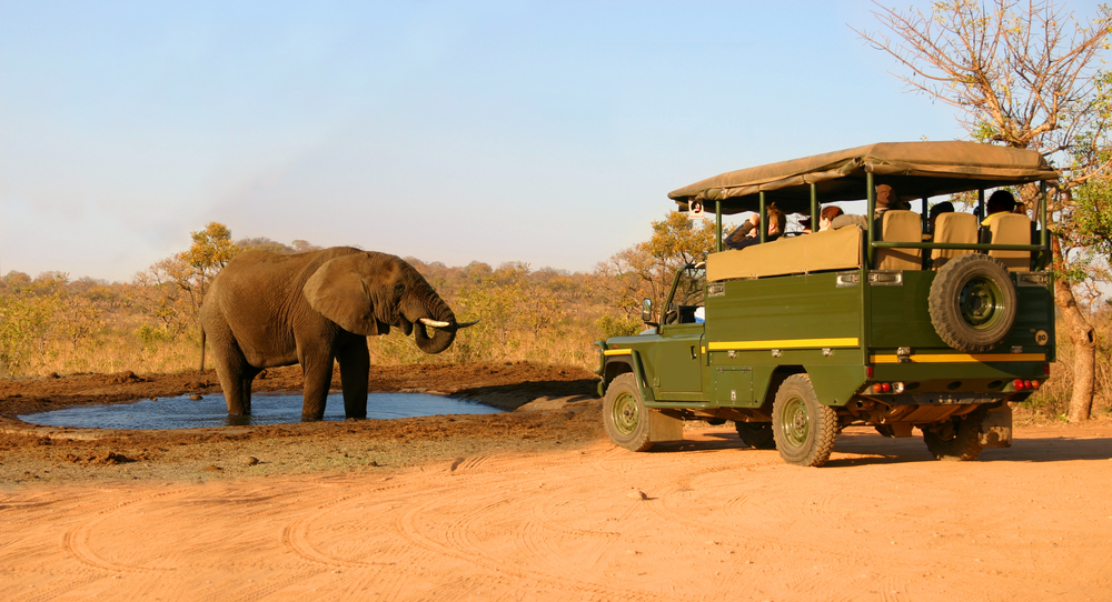 elephant and safari jeep.jpg