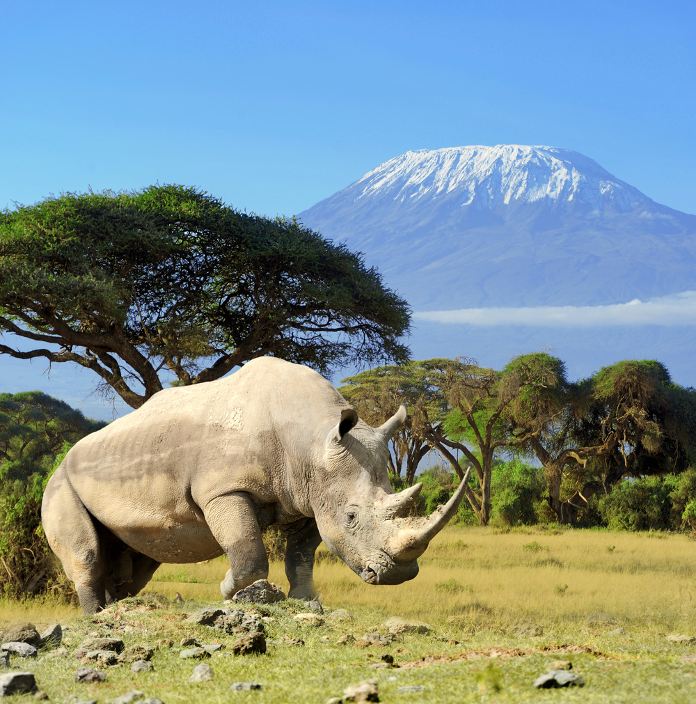 Rhino and Kilimanjaro.jpg