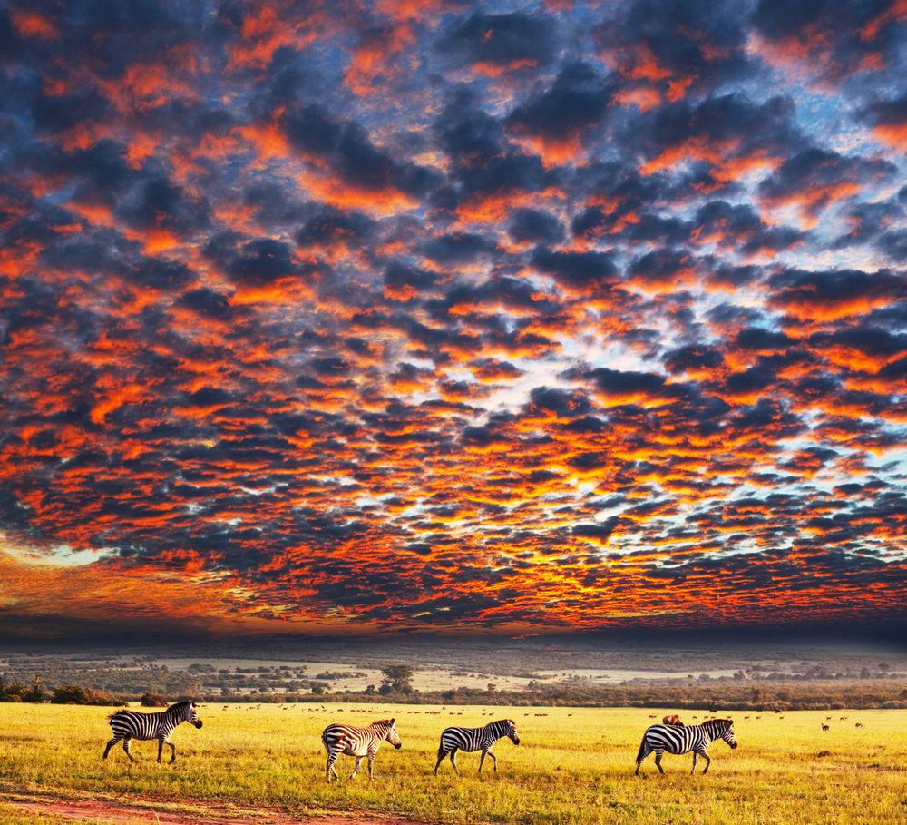Serengeti - zebras under colorful skies.jpg