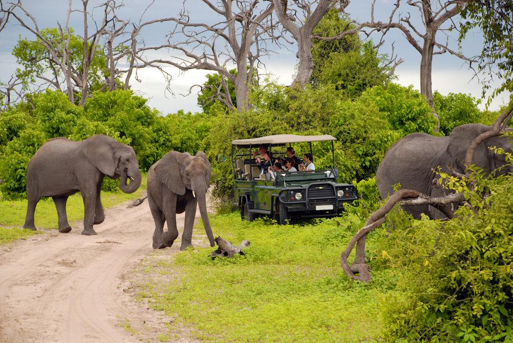 Elephants and jeep.jpg