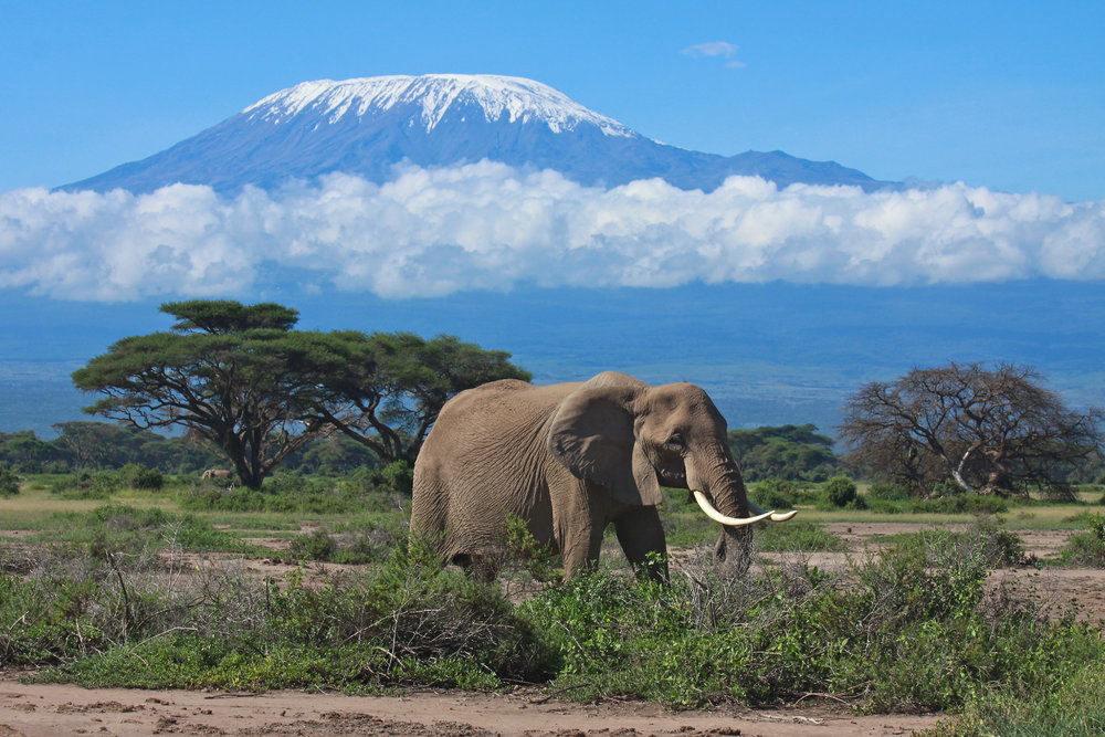 Single elephant and Kilimanjaro.jpg