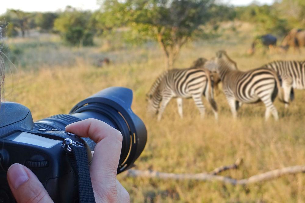 Copy of Photographer on safari with zebras.jpg