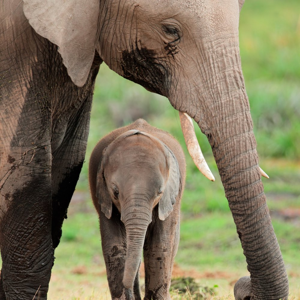 elephants mother and calf copy.jpg