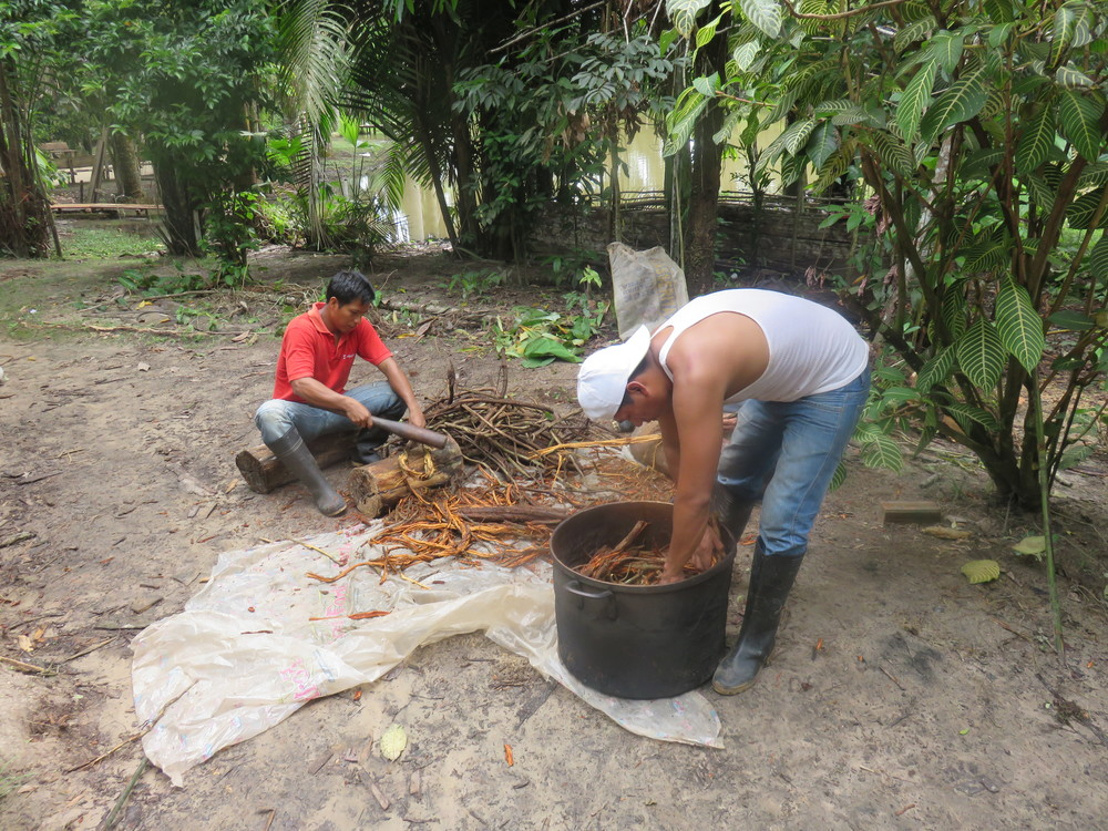 Ayahuasca preparation