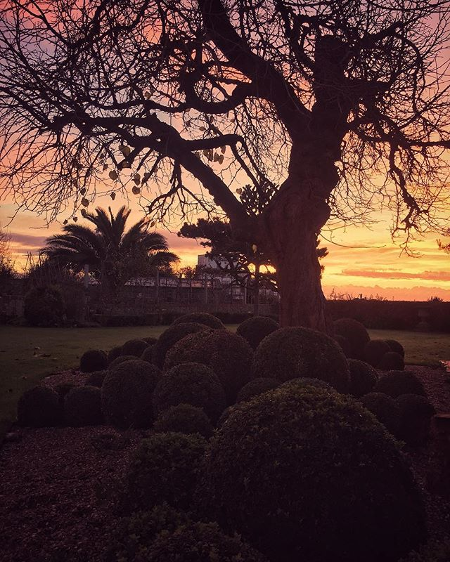 Magical sunrise to start the week off!. . . #mygarden #kent #sun #sunrise #garden #designer #designer #colour #interiordesign #inspiration #gardener #sea#seaside #palmtree #silhouette