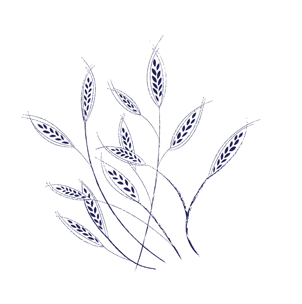 Oat Illustration-01.jpg