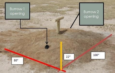 """View         of         artificial         burrow         mound         with         2    openings     oriented     NW     and     SE    to   avoid    direct    sun    light    into    burrow.     Mound     dimensions:    18""""    below     surface,    22""""    above     surface,     and    80""""   x   100"""".    T-post   perch is  60""""  high  and   40""""  wide."""