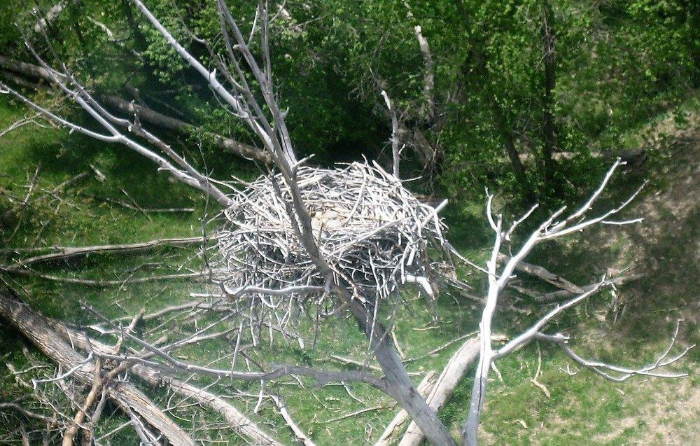 Raptor Nest_ZOOM_eggs.jpg
