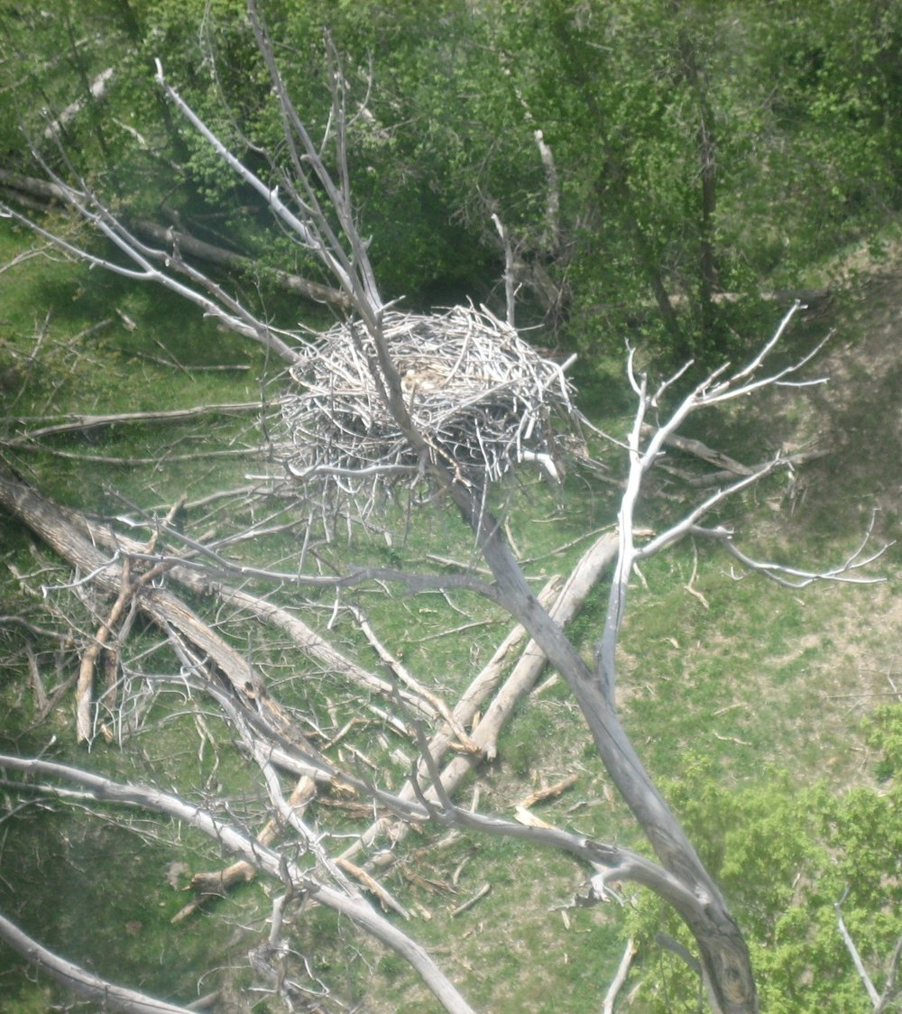 Raptor Nest.jpg