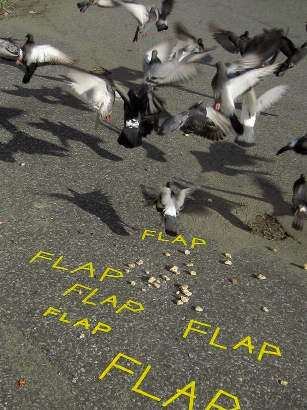 FLAP_1_web.jpg