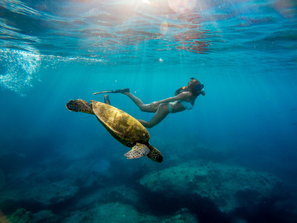 swim with a turtle