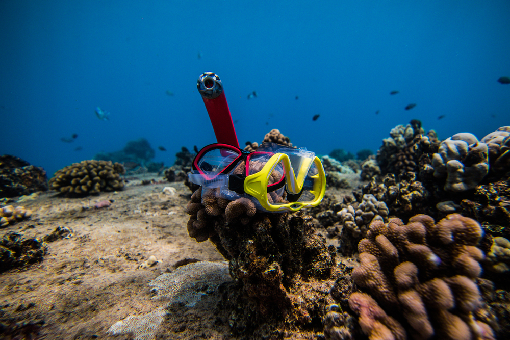 mask/snorkel on reef