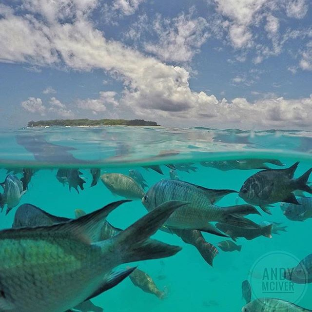 Amazing photo by Andy McIver! Love the ocean! @andy.mciver #snorkeling #ocean #adventure #beach #tropical #freediving