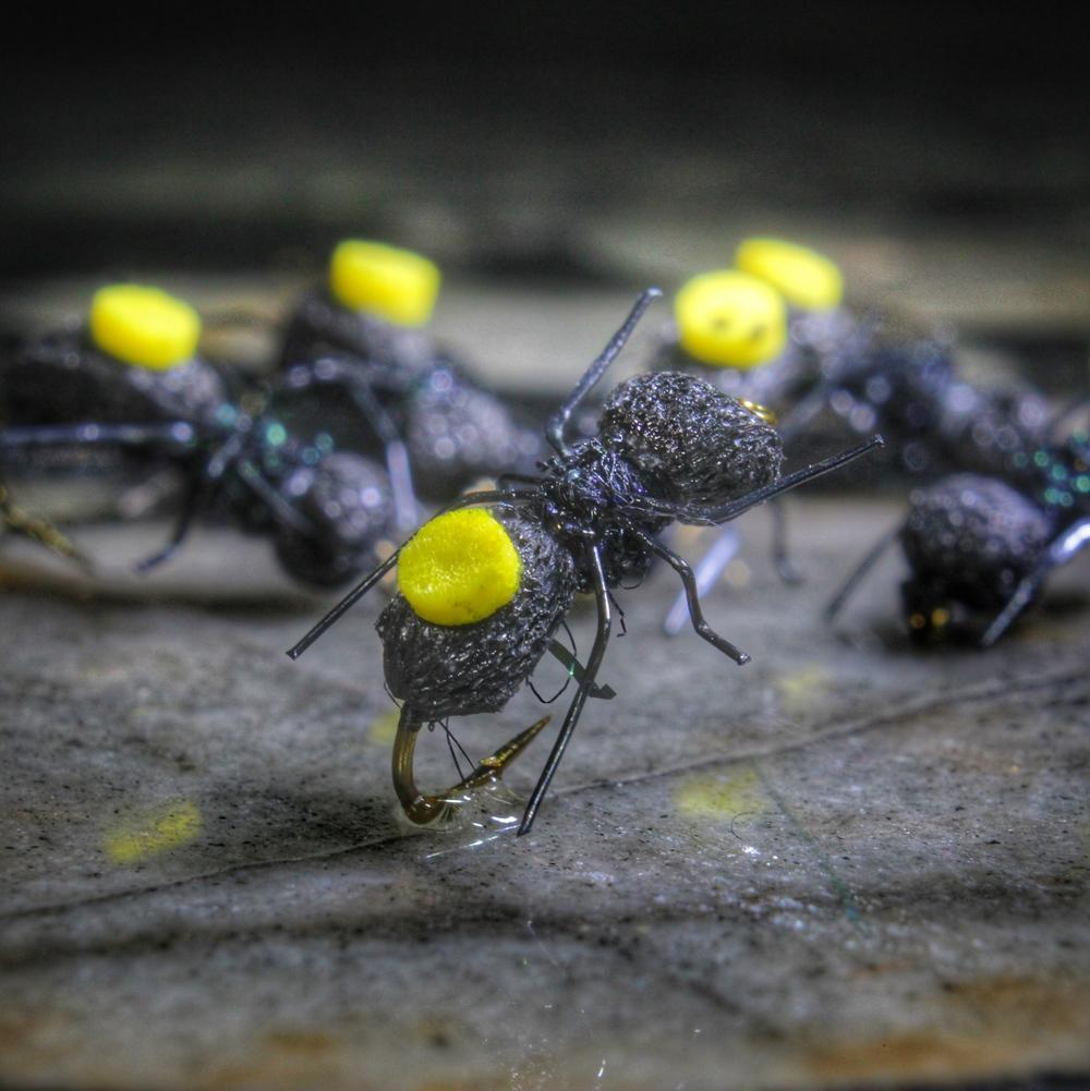 Adam's Ant with Foam Indicators