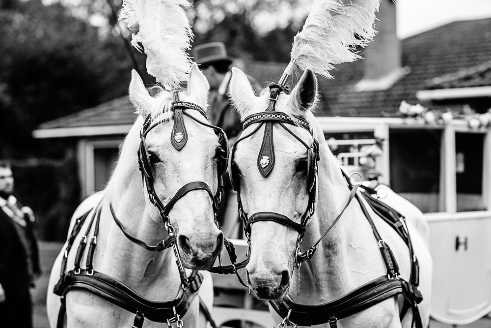Tudor Barn Belstead Wedding - Horse and carriage