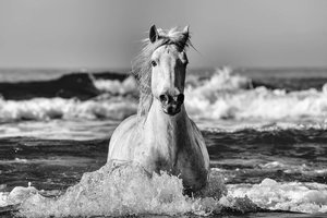 Camargue Sea Horse.jpg