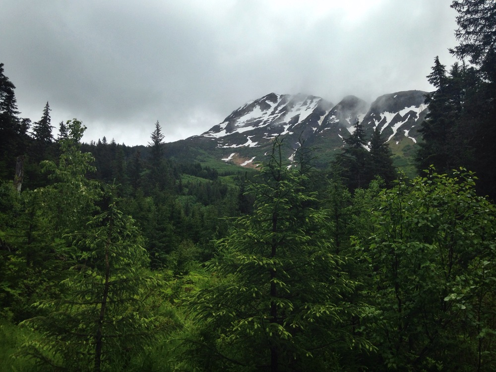 "Chugach National Forest, a ""sub-polar rain forest"" - met a family of black bears"