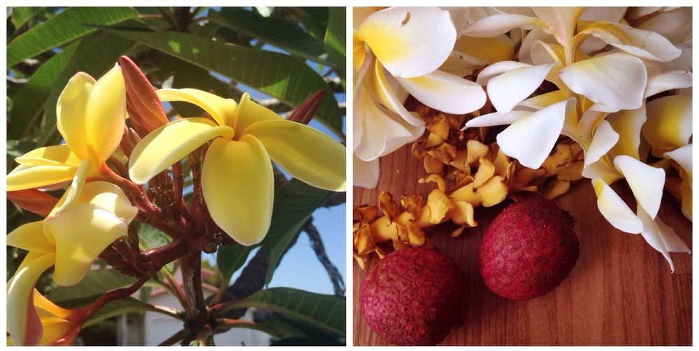 fragrant plumeria trees, leis, and lychees