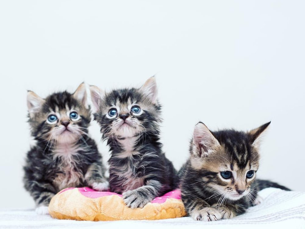Meet the Kittens — Kitten Lady