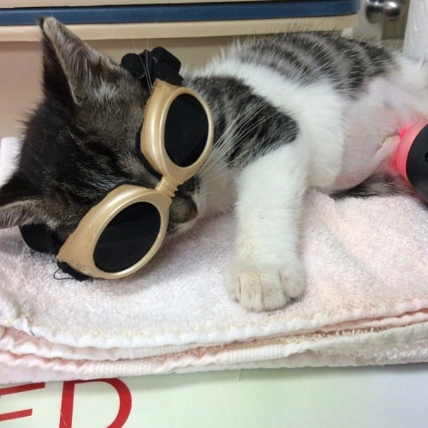 Soba receiving laser treatment on her incision
