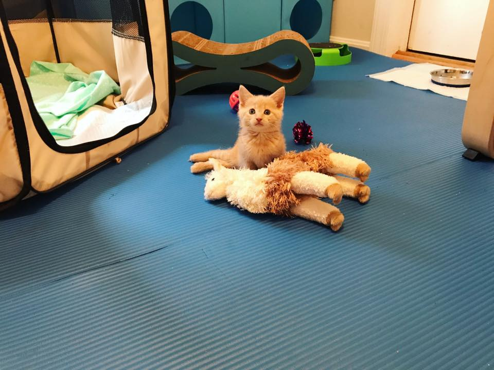 These yoga mats are great!